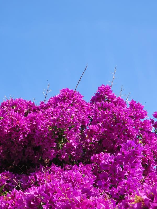 Mallorca 2015 Flowerona -14
