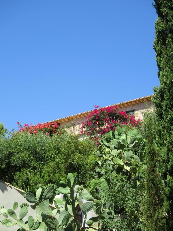 Mallorca 2015 Flowerona -3