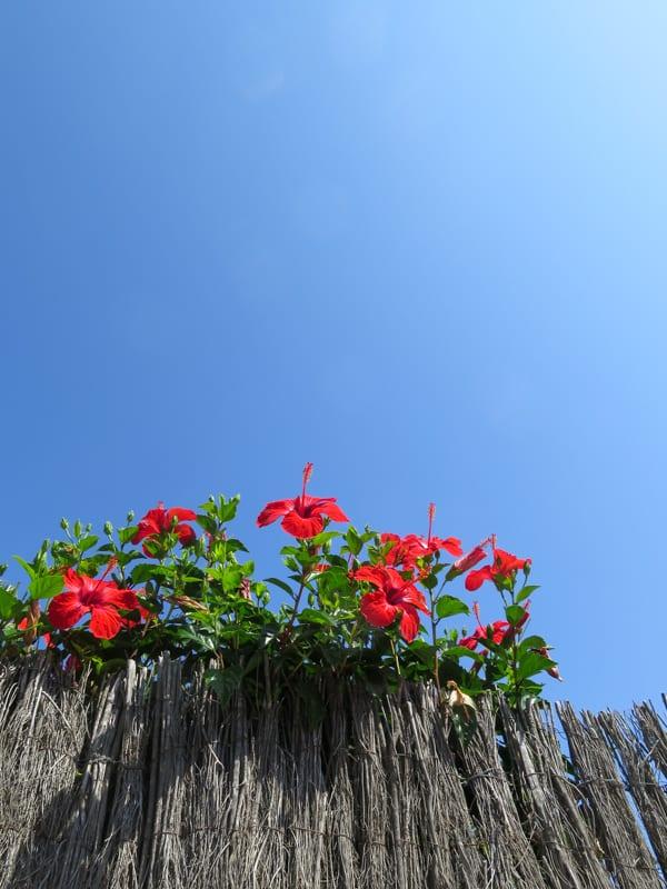 Mallorca 2015 Flowerona -8