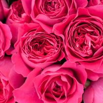 RHS-Hampton-Court-Palace-Flower-Show-2015-Flowerona-Feature-Roses