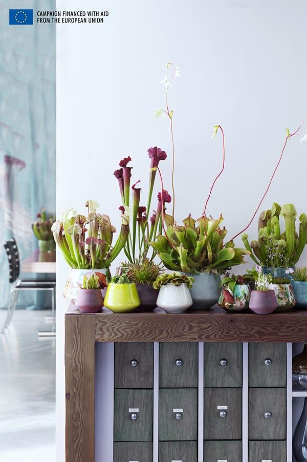 houseplant of the month carnivorous plants flowerona