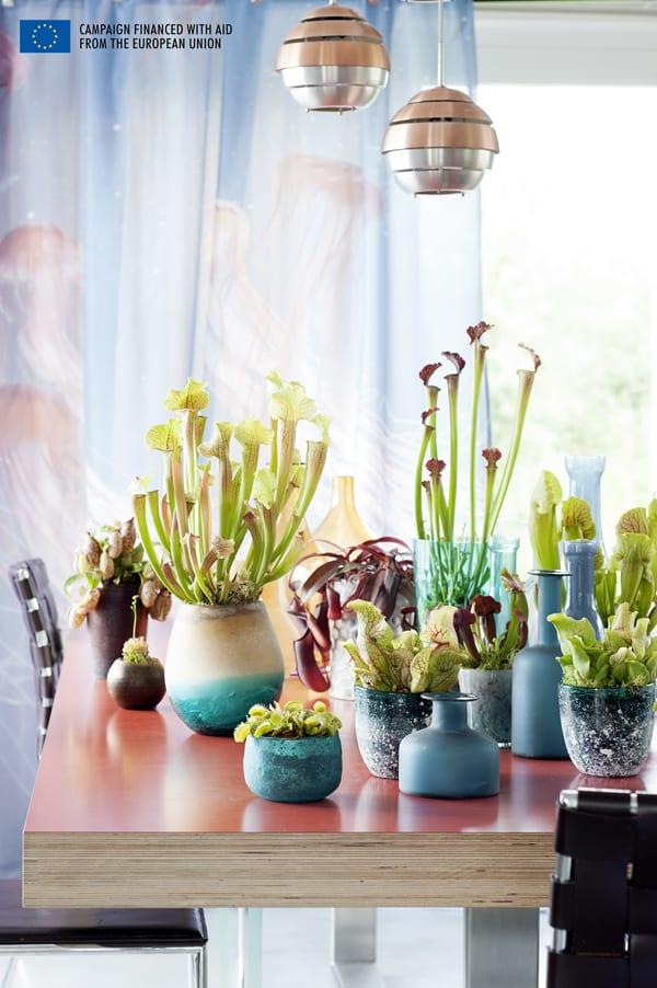 Carnivorous-Plants-Flowerona-3