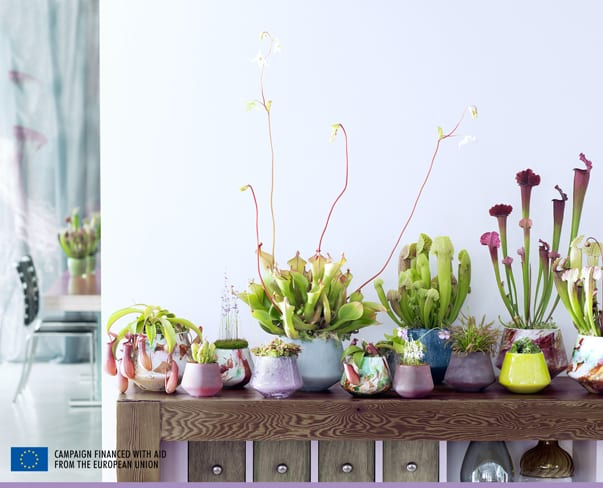 Houseplant of the Month – Carnivorous Plants