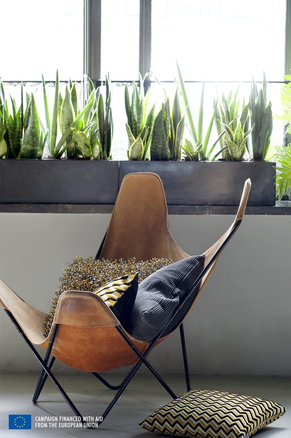 Houseplant-of-the-Month-August-2015-Sansevieria-Mother-in-laws-tongue-Flowerona-1
