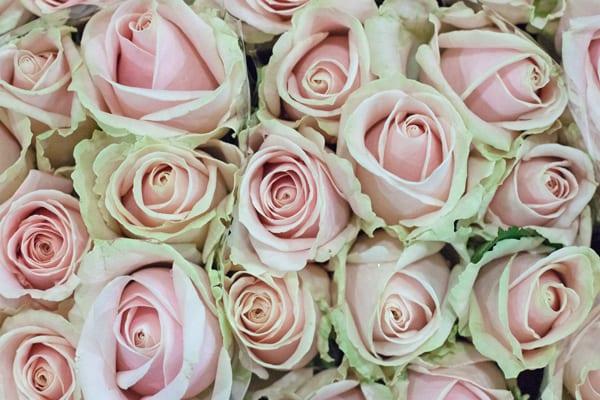 Sweet-Avalanche-Flowerona-1