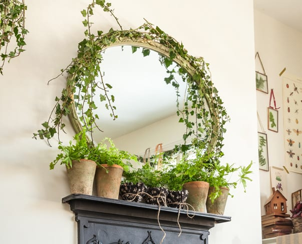 Florist Friday : Houseplant inspiration…from ferns to succulents