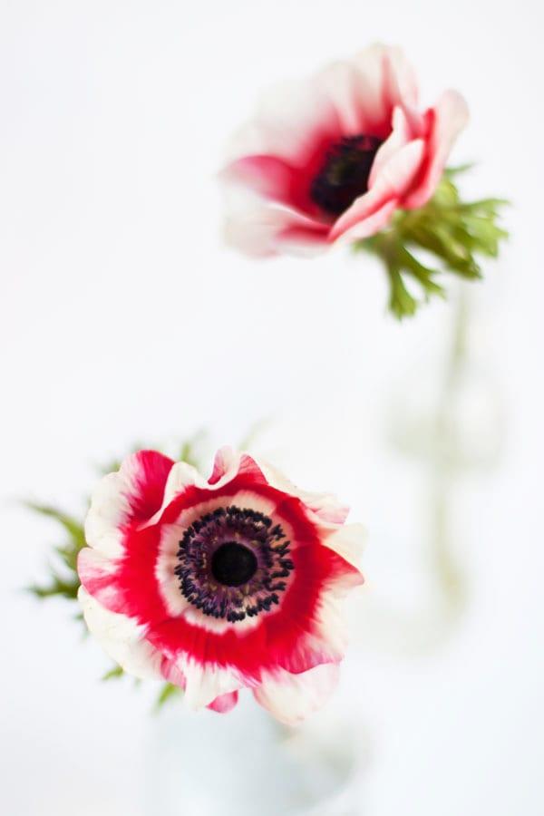 Anemones Flowerona