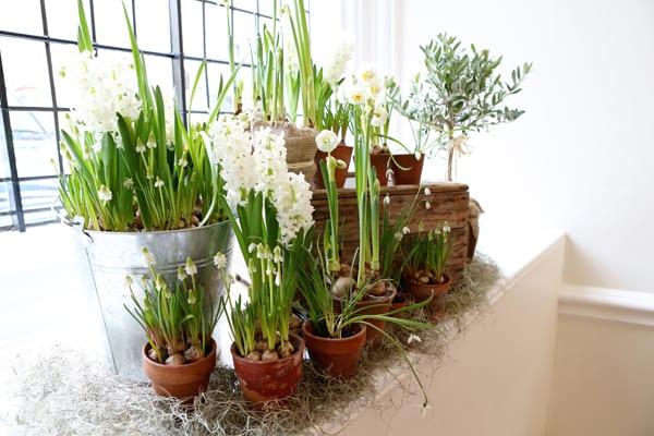 Eden-Blooms-Flowerona-2