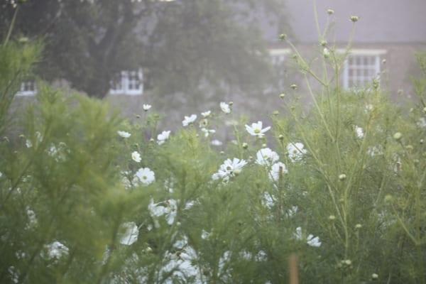 The-Land-Gardeners-Flowerona-13