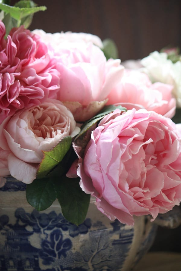 The-Land-Gardeners-Flowerona-14