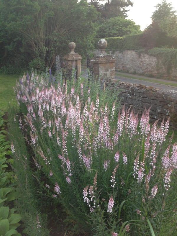 The-Land-Gardeners-Flowerona-15