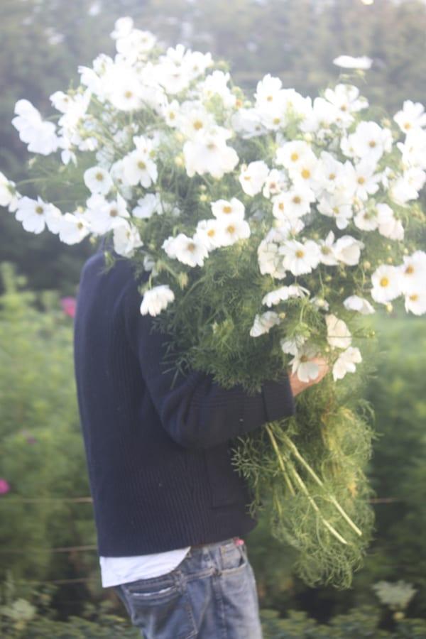 The-Land-Gardeners-Flowerona-16