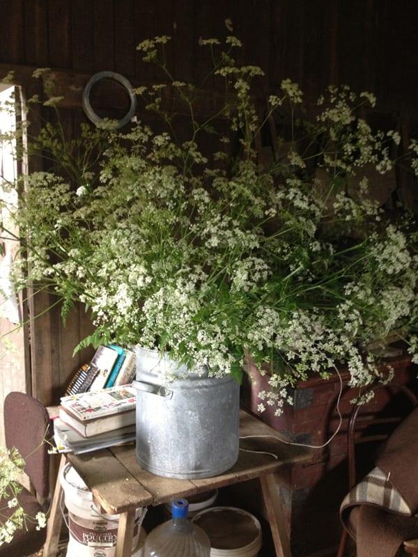 The-Land-Gardeners-Flowerona-17