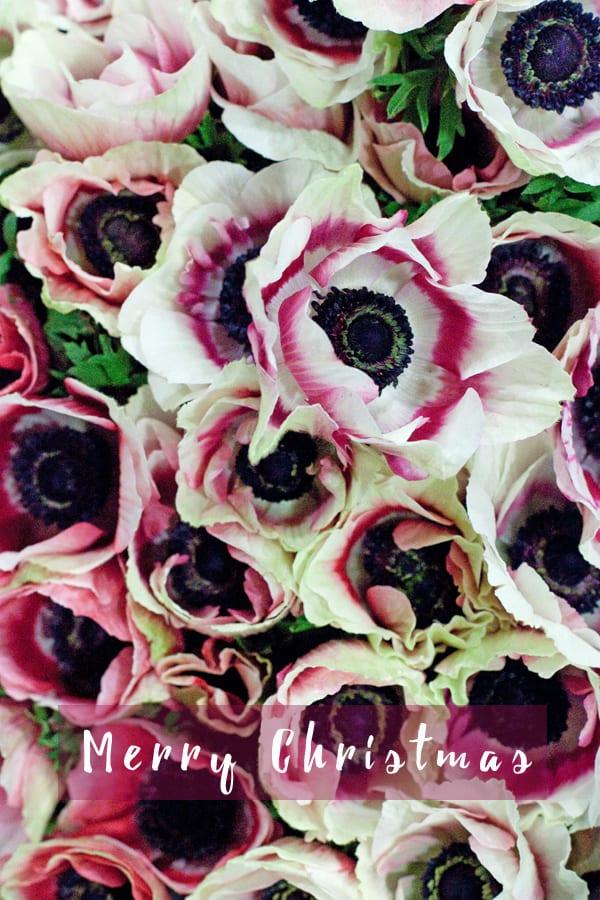 Flowerona-Anemones-1