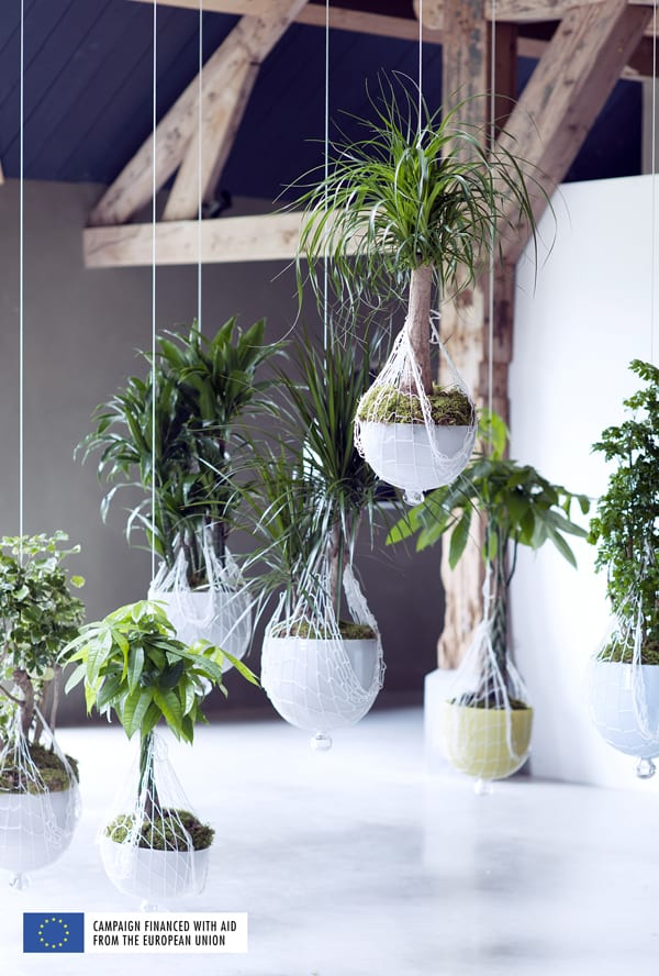 Indoor-Trees-Houseplant-of-the-Month-January-2016-Flowerona-4