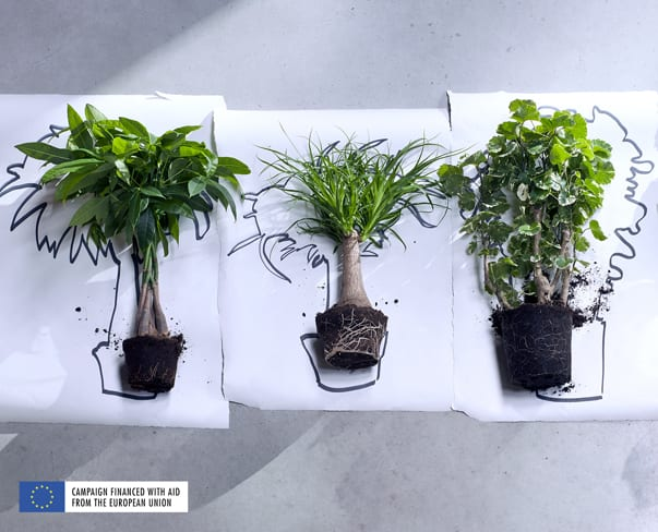 Houseplant of the Month – Indoor Trees