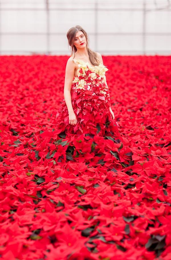 Ponsettia-Dress-Okishima-&-Simmonds-Flowerona-Julian-Winslow-4