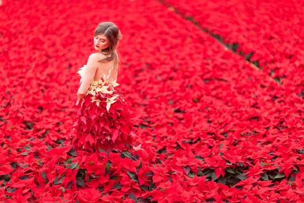 Ponsettia-Dress-Okishima-&-Simmonds-Flowerona-Julian-Winslow-5