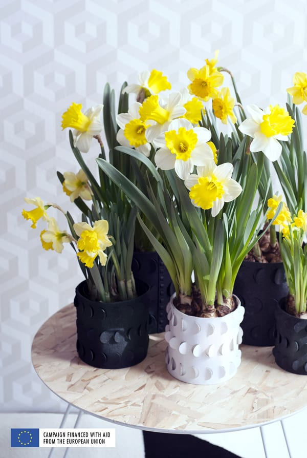 Flower-Council-of-Holland-Houseplant-of-the-Month-Narcissus-Flowerona-4