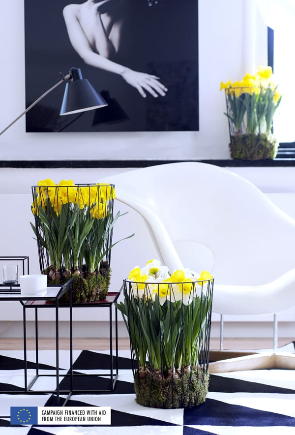 Flower-Council-of-Holland-Houseplant-of-the-Month-Narcissus-Flowerona-5