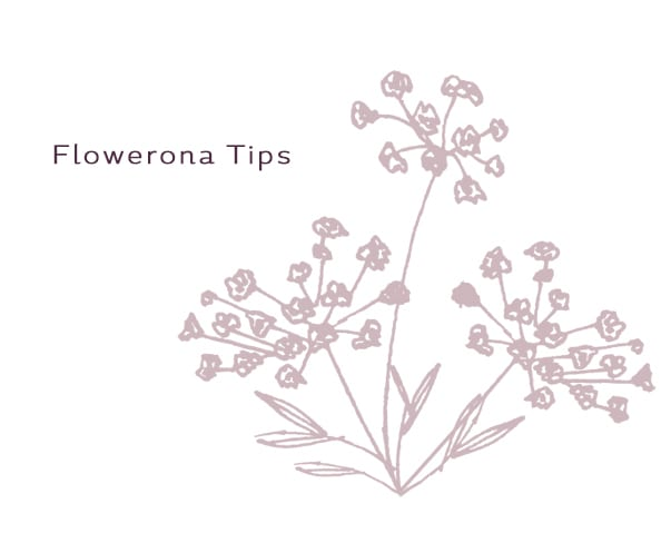 Flowerona Tips : Use MailChimp to send out email newsletters