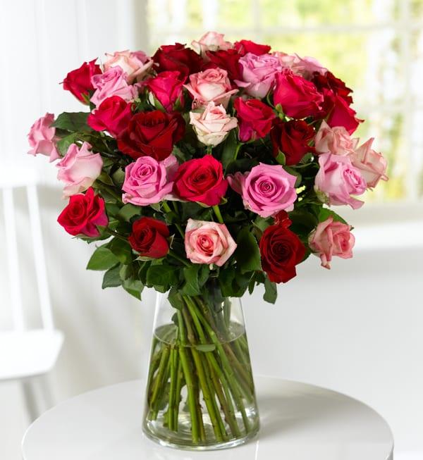 Marks-&-Spencer-Classic-Roses-Hot-Pink-(online)-35