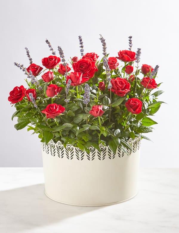 Marks-&-Spencer-Red-Rose-&-Lavender-Bowl-(online)-40