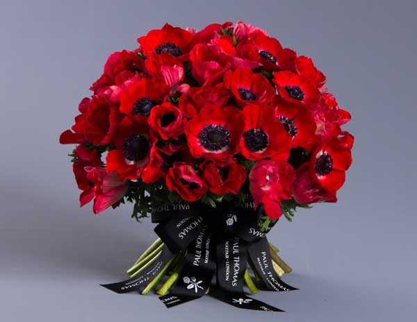 Paul-Thomas-Valentine's-Day-2016-Scarlet-Anemone