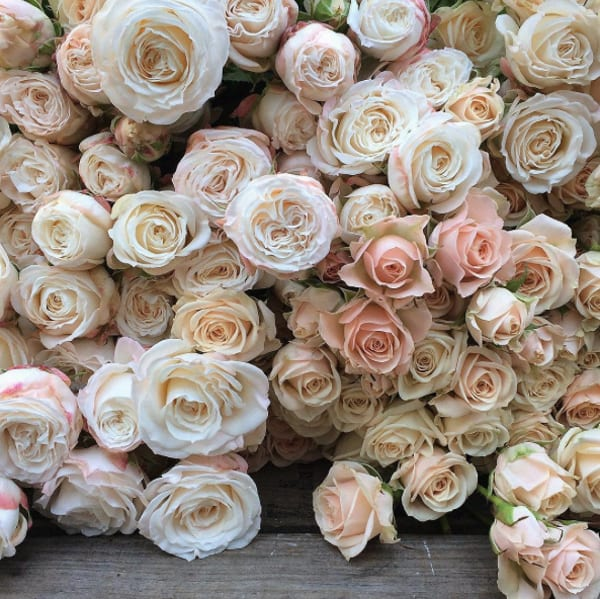 Steph-Turpin-Fairy-Nuff-Flowers-Roses-Instagram