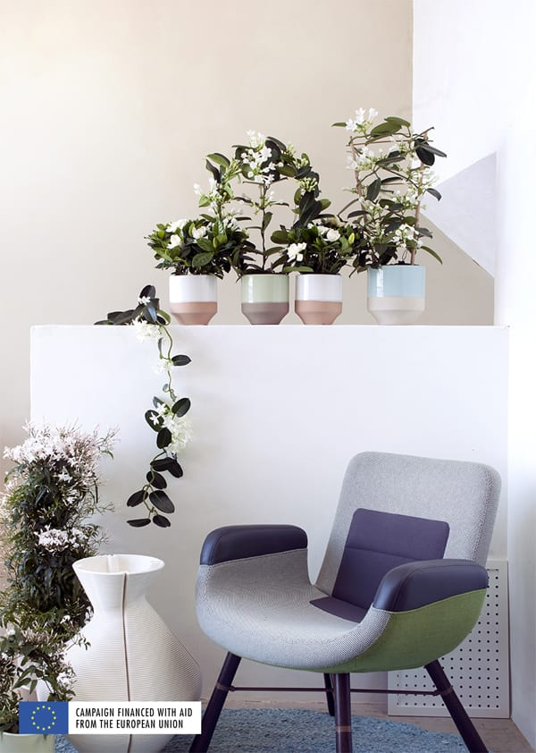 White-Fragrant-Plants-Houseplant-of-the-Month-March-2016-Flowerona-2