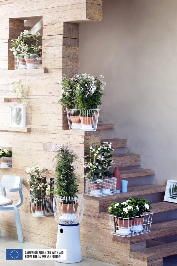 White-Fragrant-Plants-Houseplant-of-the-Month-March-2016-Flowerona-4