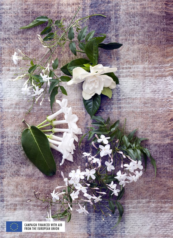White-Fragrant-Plants-Houseplant-of-the-Month-March-2016-Flowerona-5