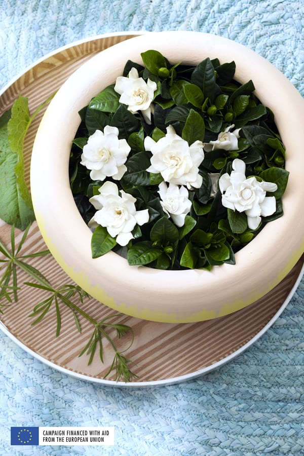 White-Fragrant-Plants-Houseplant-of-the-Month-March-2016-Flowerona-Gardenia-3