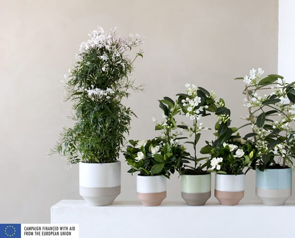 Houseplant of the Month – White Fragrant Plants