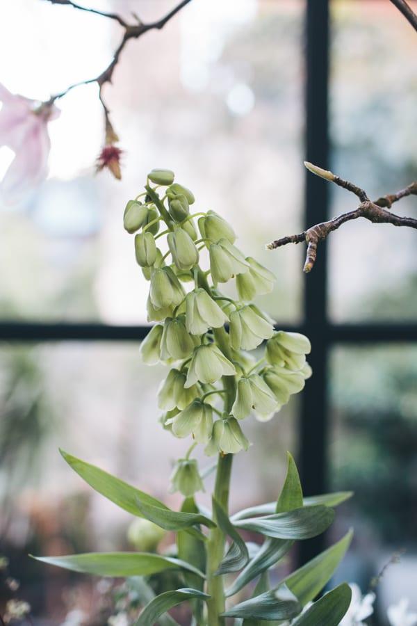 Florist Jo Flowers Photographer Joanna Millington Flowerona-13