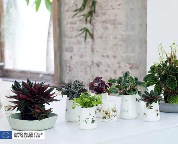Houseplant of the Month – Peperomia