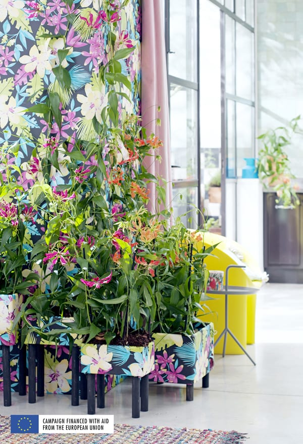 Blooming-Tropical-Plants-Houseplant-of-the-Month-May-2016-Flowerona-6