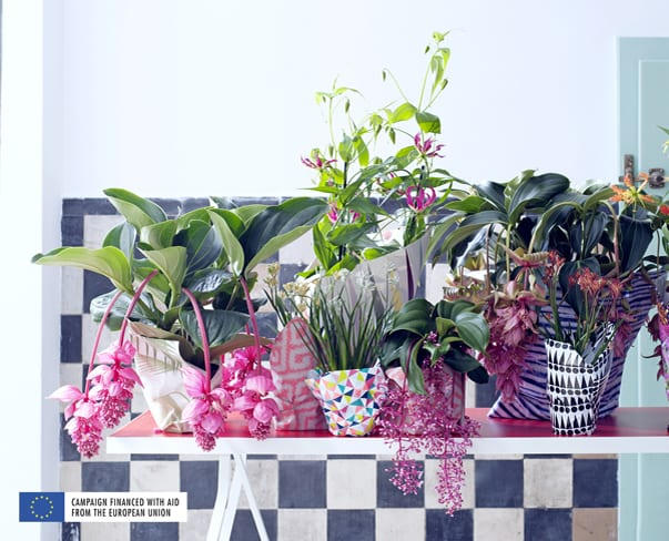 Houseplant of the Month – Blooming Tropical Plants