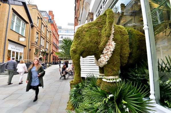Chelsea-in-Bloom_The-White-Company-Larry-Walshe-1