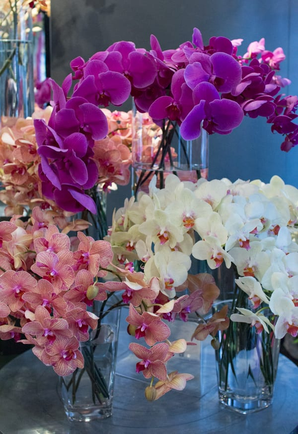 Neill Strain For the Love of Orchids 2016 Chelsea Fringe Belgravia in Bloom Flowerona -11