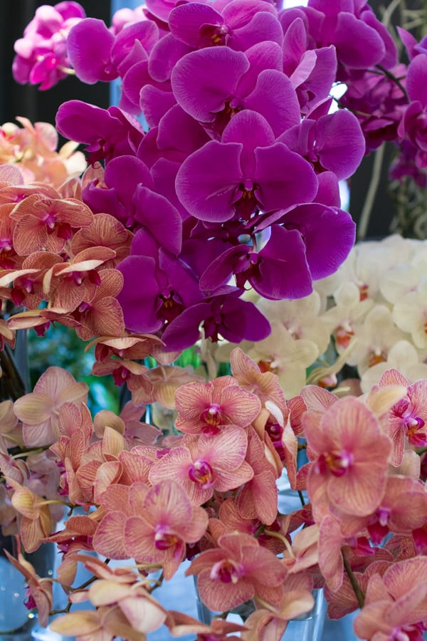 Neill Strain For the Love of Orchids 2016 Chelsea Fringe Belgravia in Bloom Flowerona -13