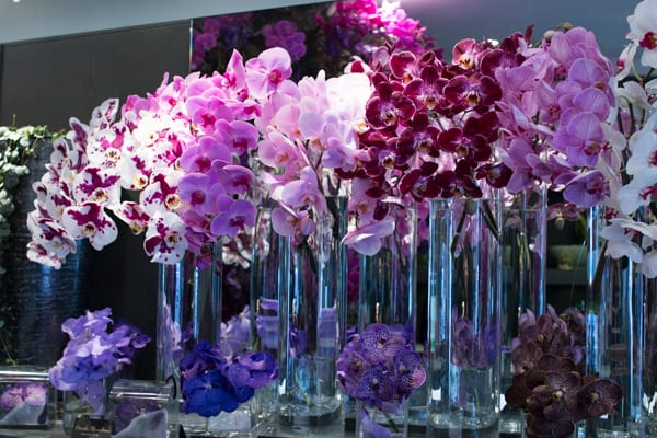 Neill Strain For the Love of Orchids 2016 Chelsea Fringe Belgravia in Bloom Flowerona -16
