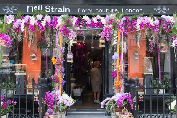 Neill Strain For the Love of Orchids 2016 Chelsea Fringe Belgravia in Bloom Flowerona -2