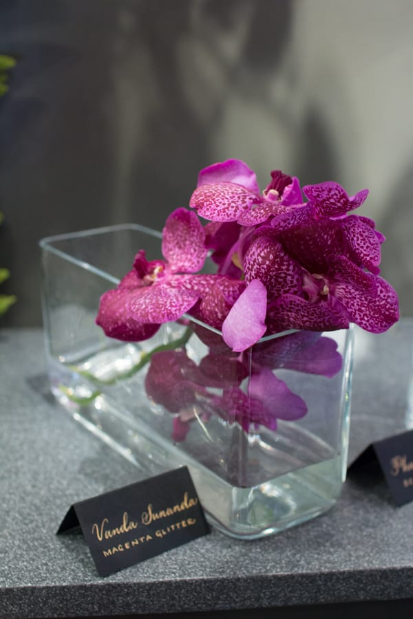 Neill Strain For the Love of Orchids 2016 Chelsea Fringe Belgravia in Bloom Flowerona -9