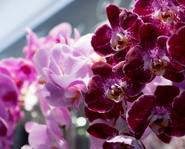 For the Love of Orchids | Neill Strain | Chelsea Fringe & Belgravia in Bloom 2016