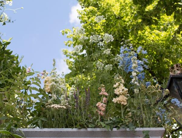 RHS Chelsea Flower Show 2016 Flora Starkey Floral Arch Flowerona-6