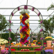 RHS-Chelsea-Flower-Show-2016-Marks-&-Spencer-M&S-Flowerona-Feature