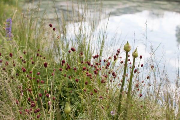 RHS Chelsea Flower Show 2016 The Cloudy Bay Garden Flowerona 35
