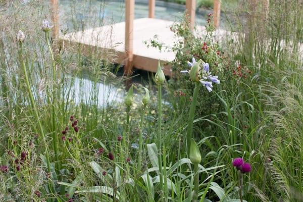 RHS Chelsea Flower Show 2016 The Cloudy Bay Garden Flowerona-36