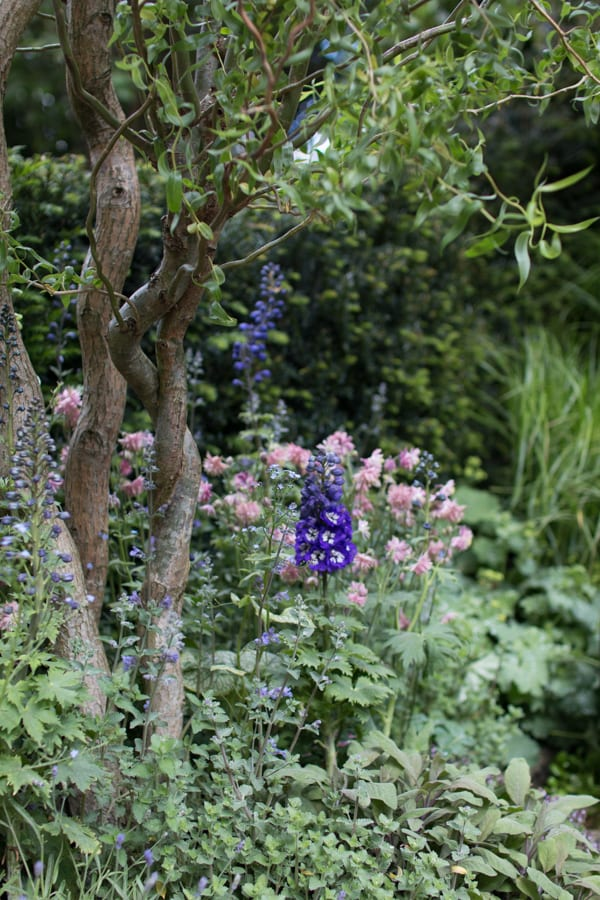 RHS Chelsea Flower Show 2016 The Garden Bed Asda Florist Alison Doxey Stephen Welch Artisan Garden Flowerona-6